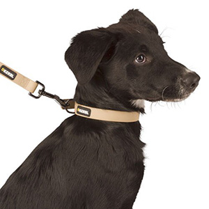 Halsband hond