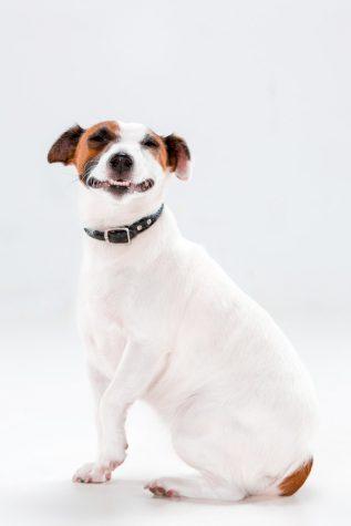 leren halsband hond